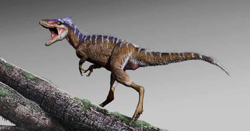 Открыт новый вид тираннозаврид