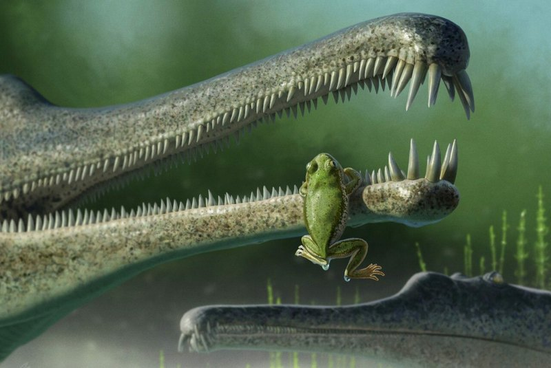 Обнаружен древний родственник лягушек возрастом 216 млн лет