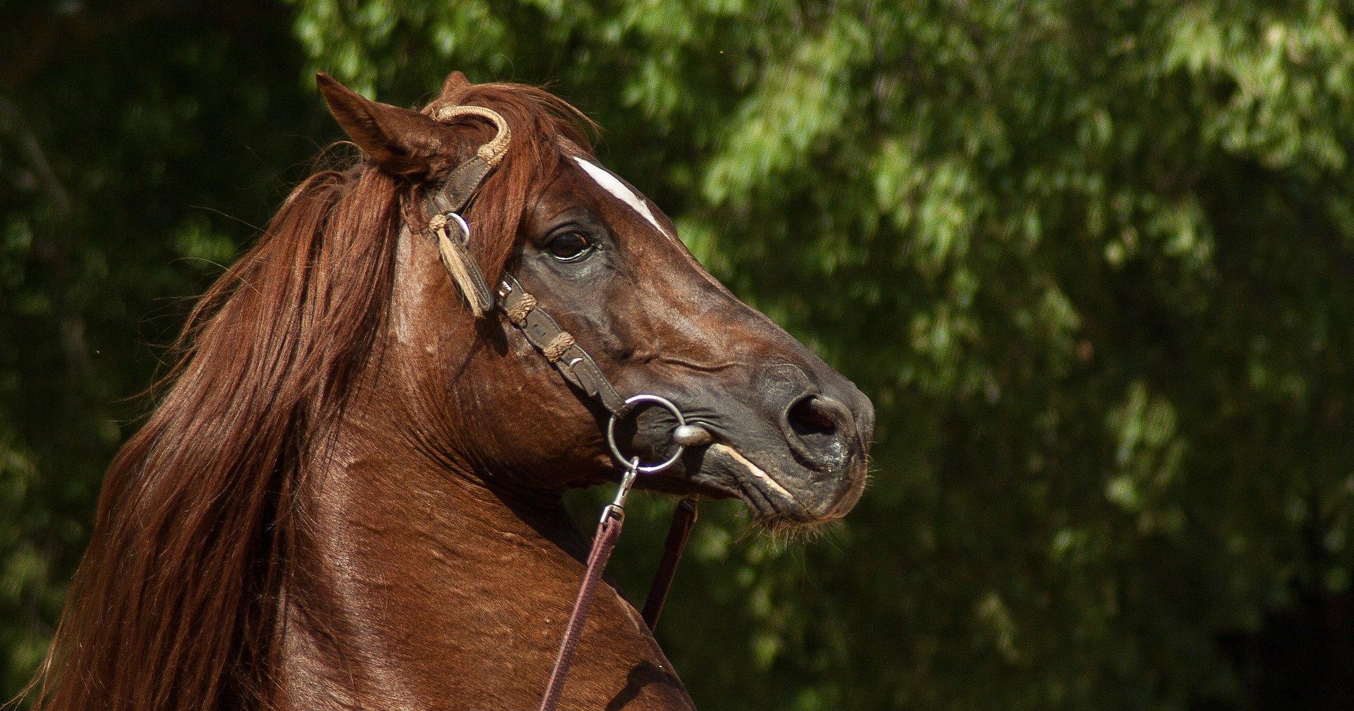 Почему лошади иногда задирают верхнюю губу и застывают в таком положении