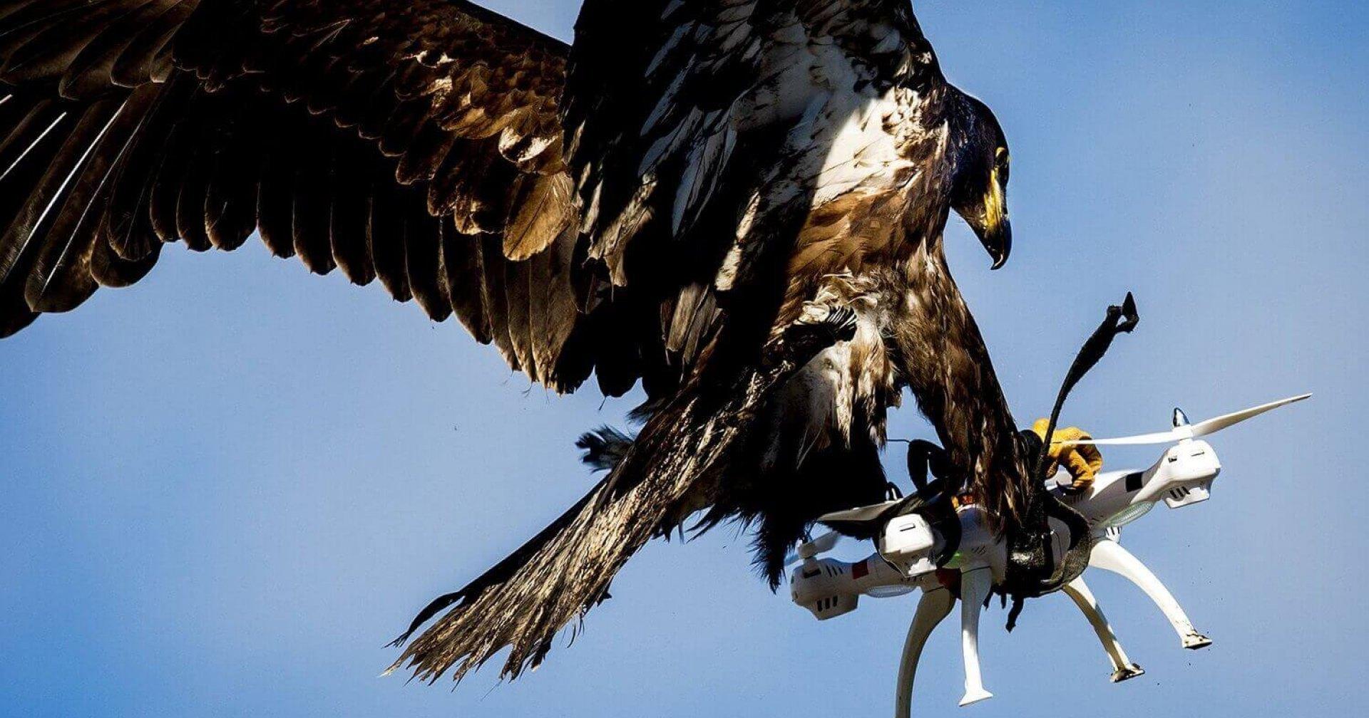 Орел против дрона: тренировка полиции