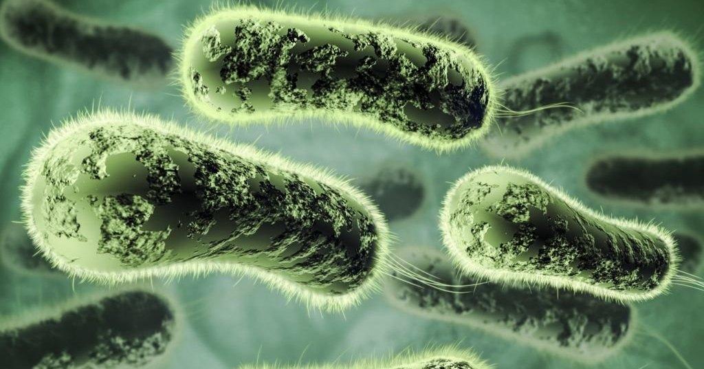 Созданы бактерии, вырабатывающие пластик из растений