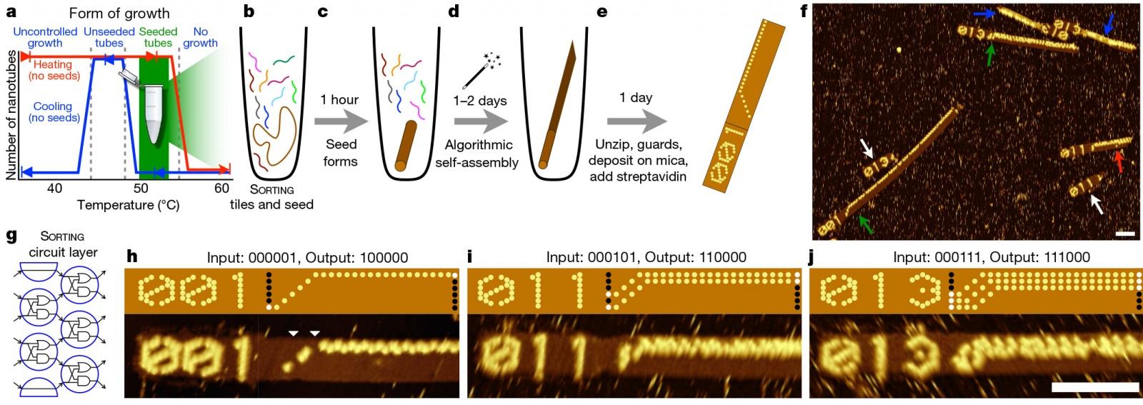 Первый программируемый компьютер на ДНК - 1