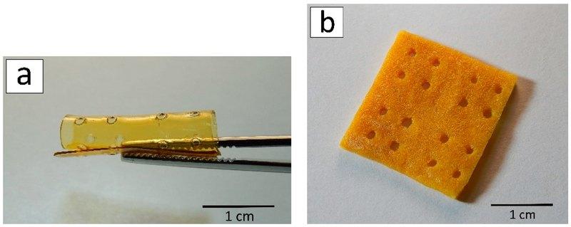 Как исцелить человека с помощью хитина краба: чудеса 3D-печати