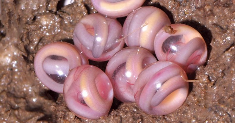 «Мраморные» яйца загадочных существ: потрясающие фото