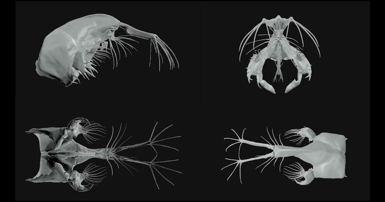 «Стеклянные черви» атакуют с невероятной скоростью: уникальные кадры