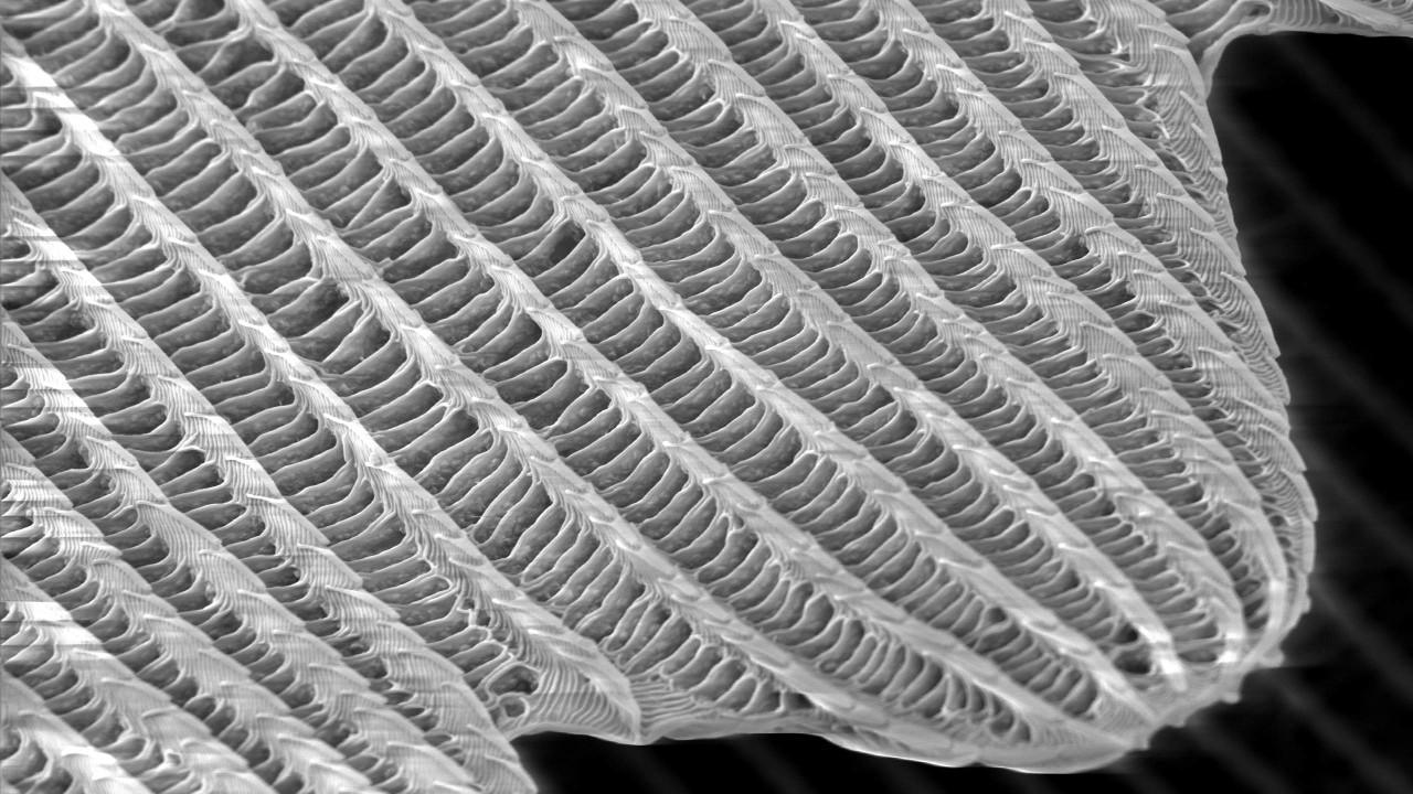 Триллион маленьких шинглов - 9