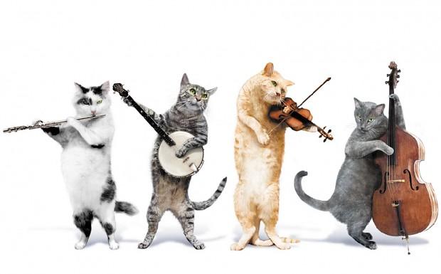 aaspcats