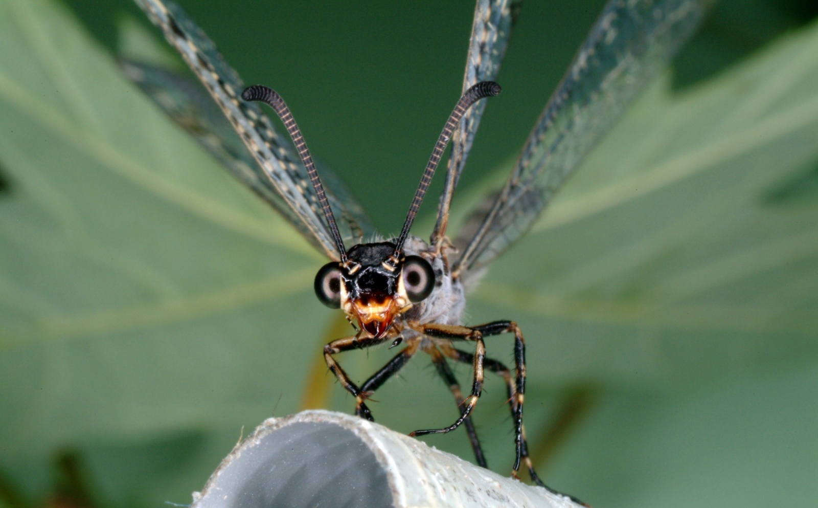 Фероподы не помогут: исследование и математическое моделирование ям-ловушек личинок муравьиных львов - 2