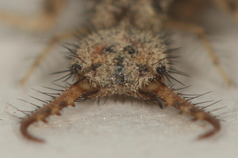 Фероподы не помогут: исследование и математическое моделирование ям-ловушек личинок муравьиных львов - 3