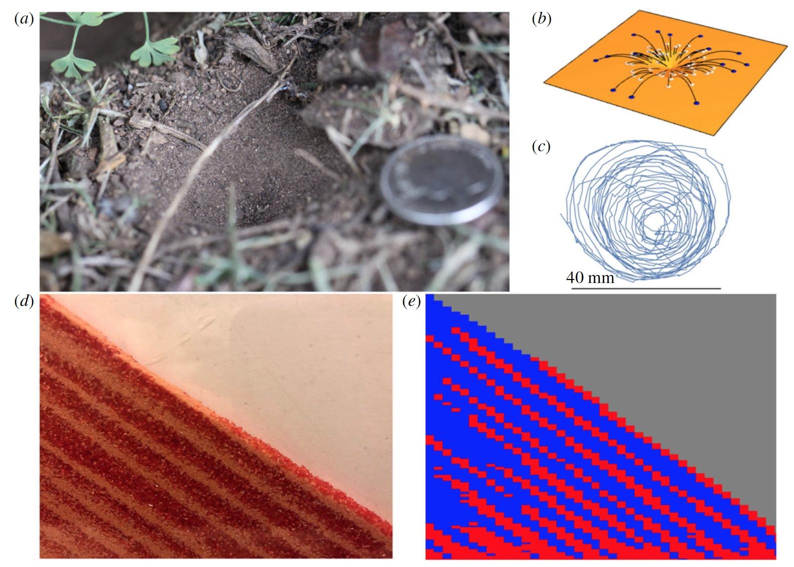 Фероподы не помогут: исследование и математическое моделирование ям-ловушек личинок муравьиных львов - 5