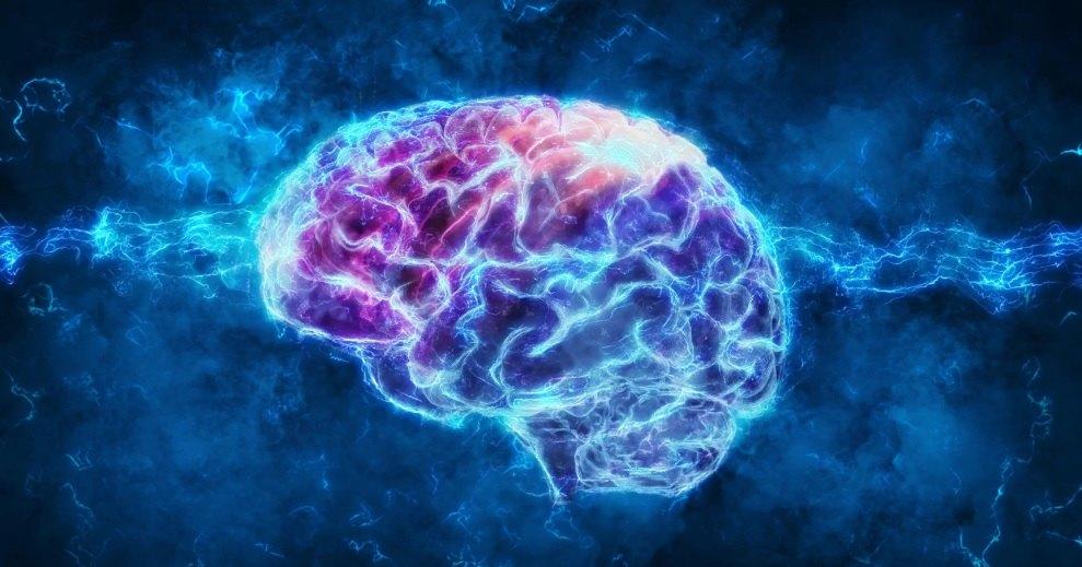 Хирурги вживили мышам прозрачные черепа, чтобы заглянуть в мозг
