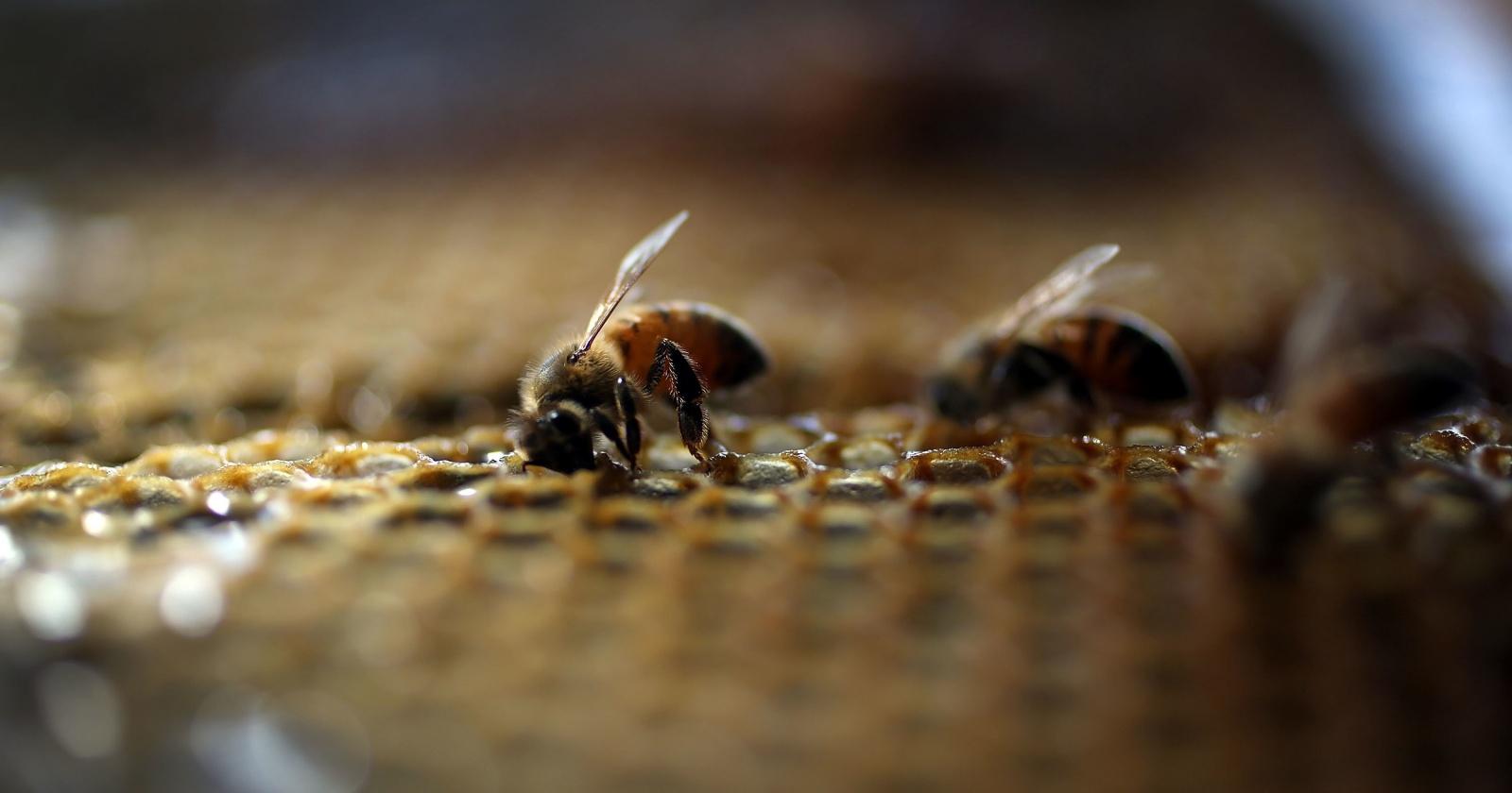 Пчелы жили в глазу женщины и питались ее слезами: жуткое открытие