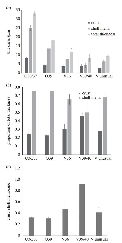 Непостоянство эволюции: живорождение и яйцекладка одновременно у ящериц вида Saiphos equalis - 7