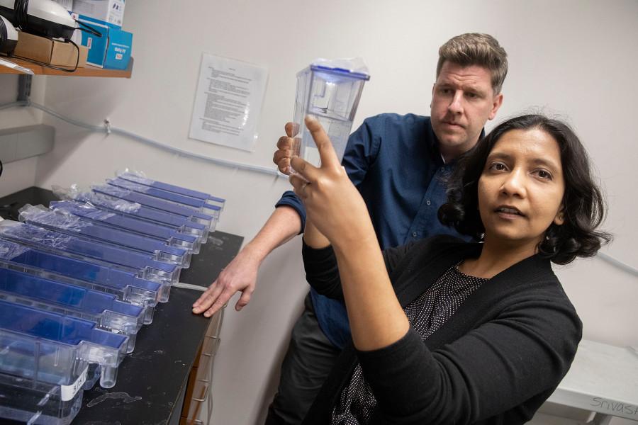 Как учёные изучают гены, контролирующие полную регенерацию тела - 1