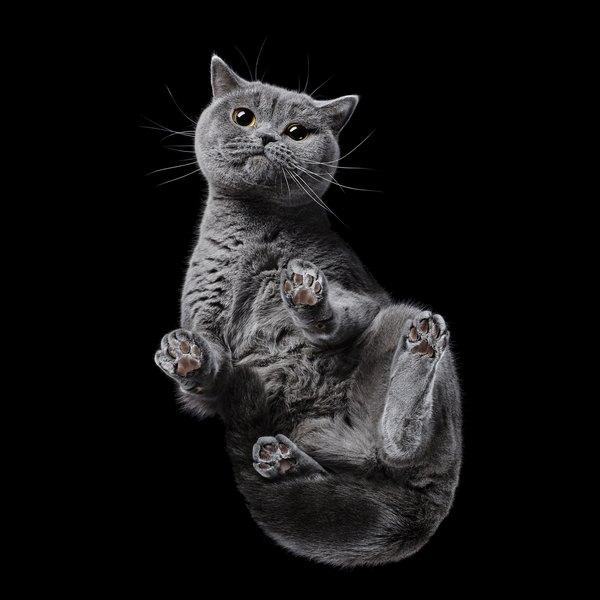 «Взгляд снизу»: животные, снятые из-под стеклянного стола
