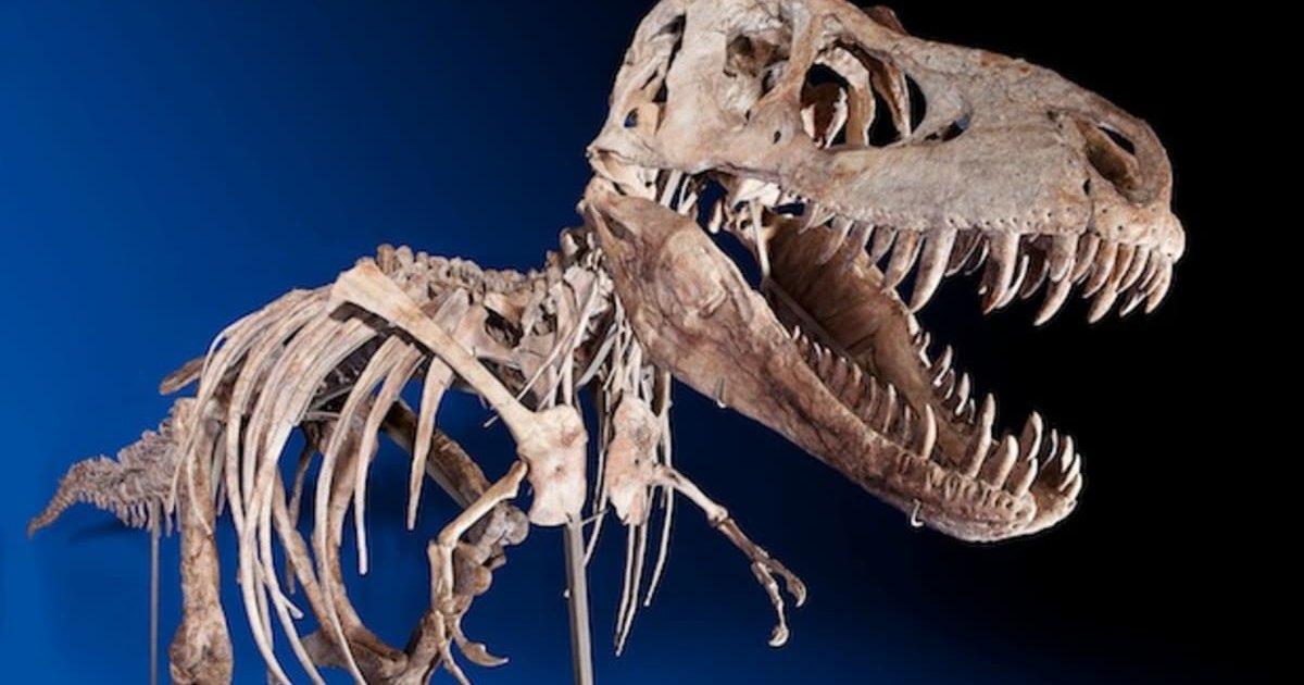 На eBay выставлен скелет детеныша тираннозавра