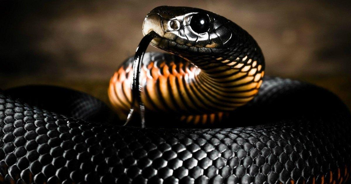 Змеи выгнали президента Либерии из офиса