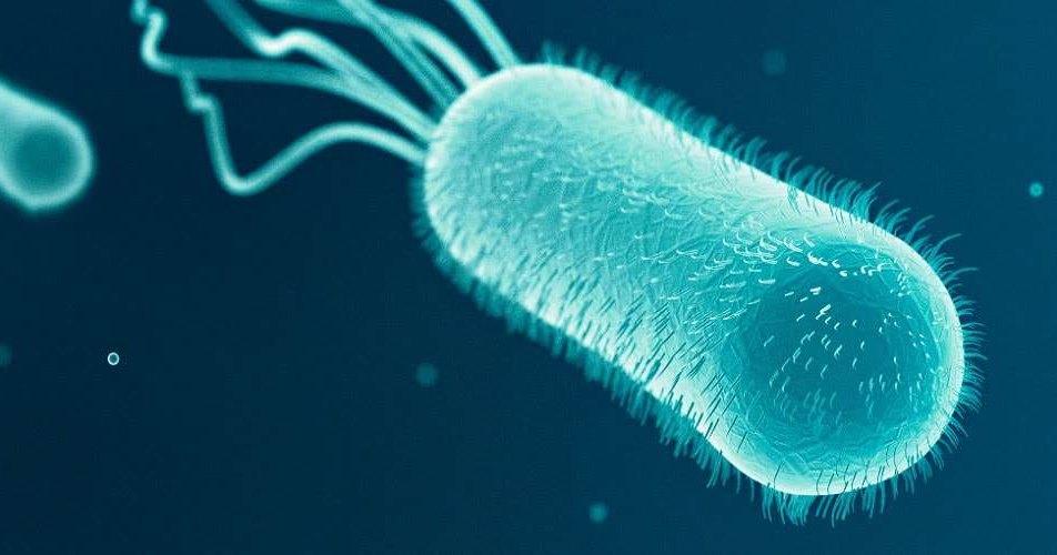 Генетически идентичные бактерии ведут себя по разному
