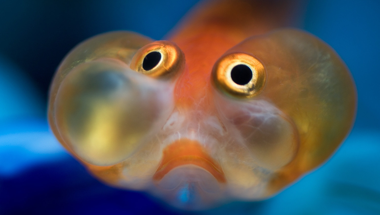 Alarm! Alarm!: как рыбы предупреждают сородичей об опасности - 1