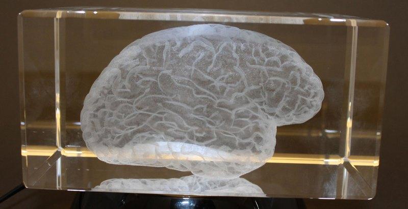 Мы теряем мозг: выживает глупейший
