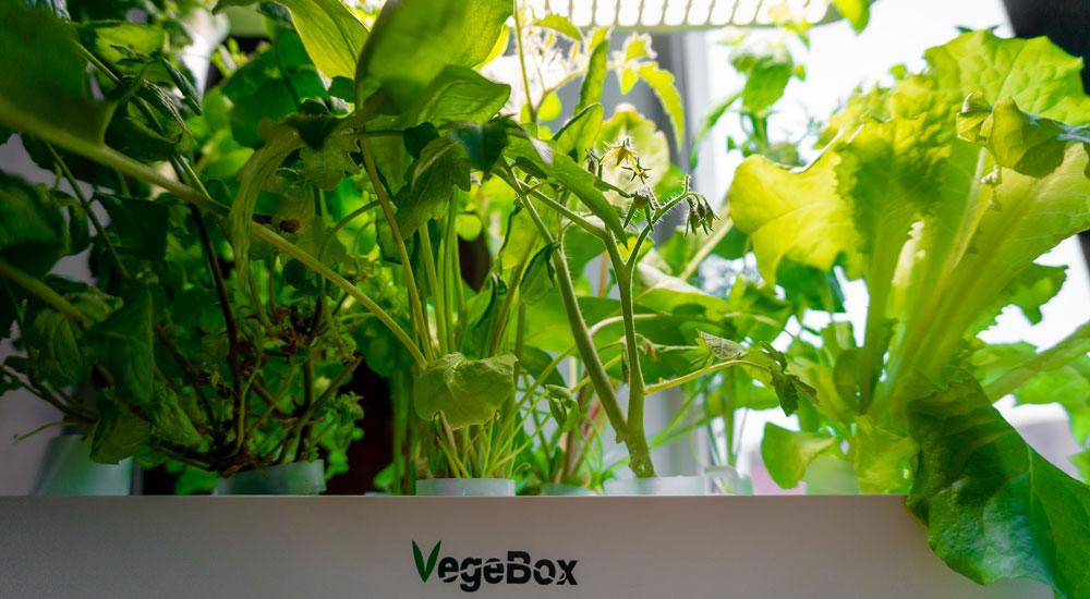 Как начать жить и выращивать салат - 1