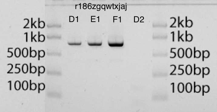 Разработка белков в облаке с помощью Python и Transcriptic или Как создать любой белок за $360 - 14