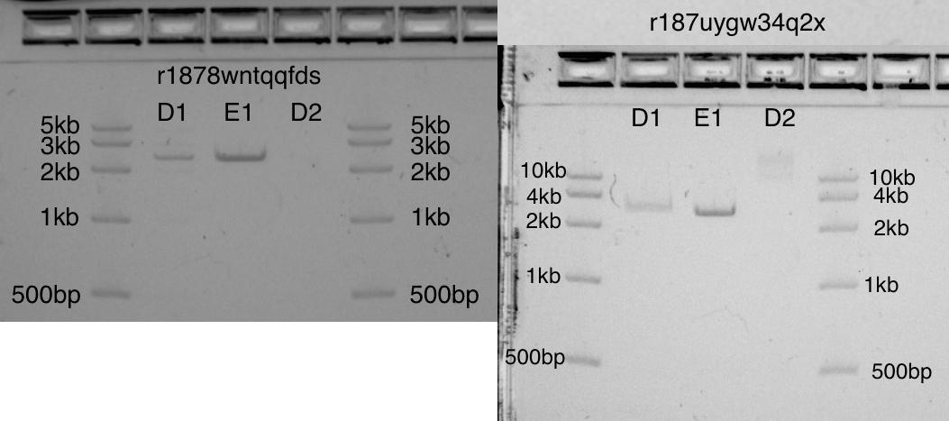 Разработка белков в облаке с помощью Python и Transcriptic или Как создать любой белок за $360 - 16