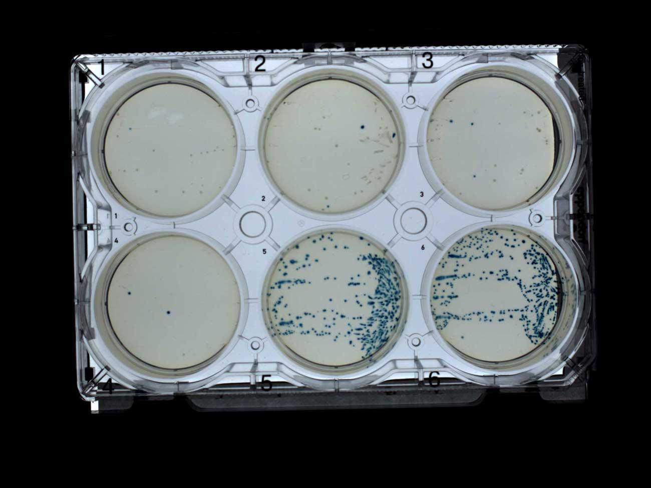 Разработка белков в облаке с помощью Python и Transcriptic или Как создать любой белок за $360 - 23