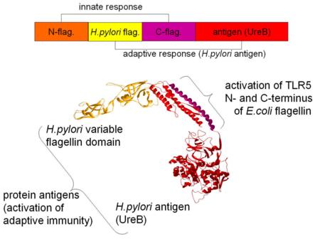 Разработка белков в облаке с помощью Python и Transcriptic или Как создать любой белок за $360 - 1