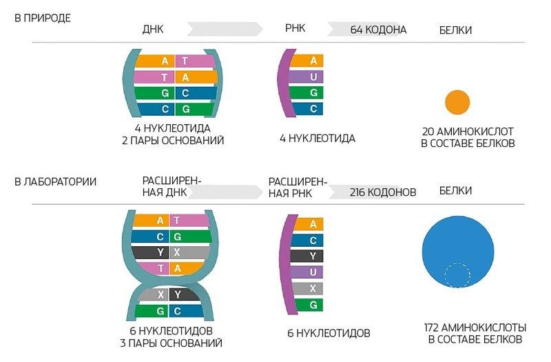 Какие возможности дает изменение алфавита ДНК?