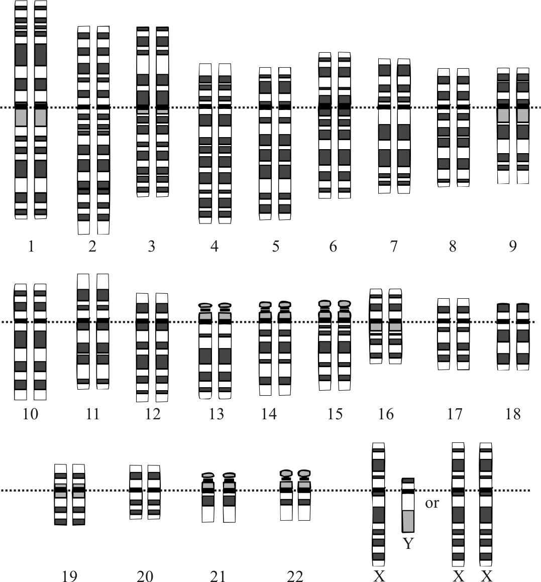 Введение в геномику для программистов - 1