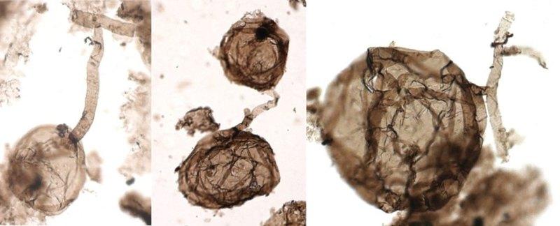Найдены древнейшие многоклеточные организмы на Земле