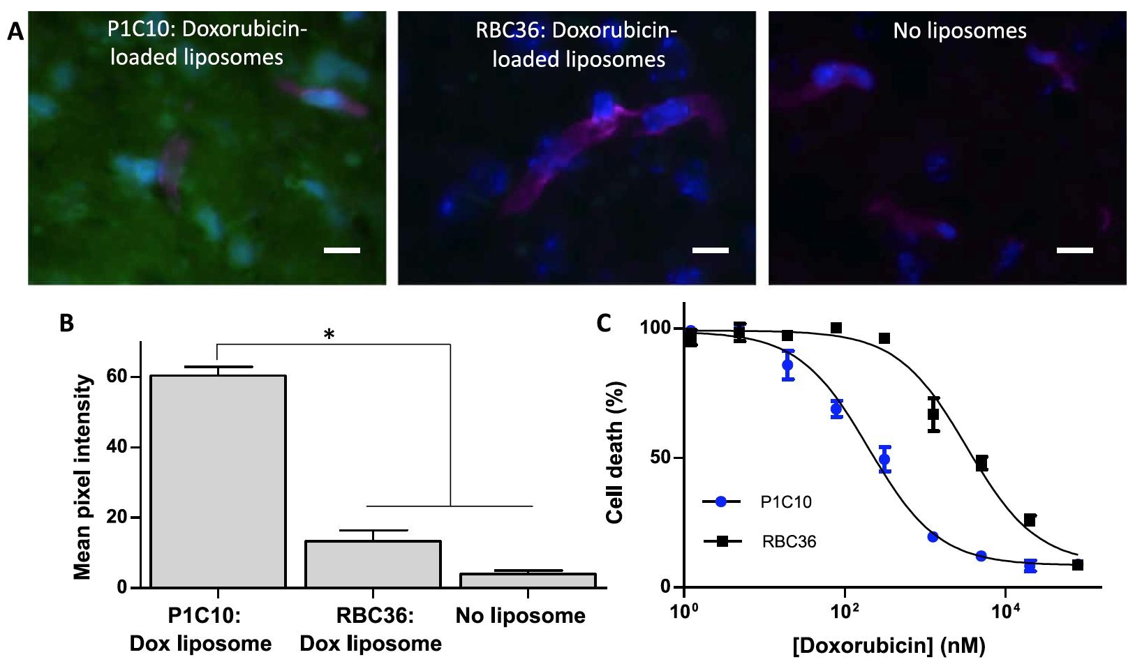 Вред во благо: иммунная система миноги в борьбе с раком головного мозга человека - 9