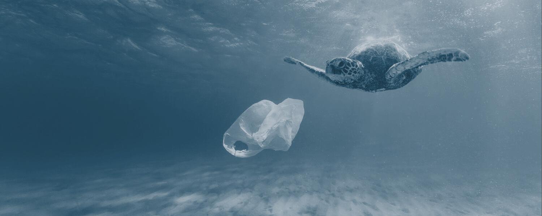 Пластиковые волны: экологическая катастрофа Мирового океана - 1