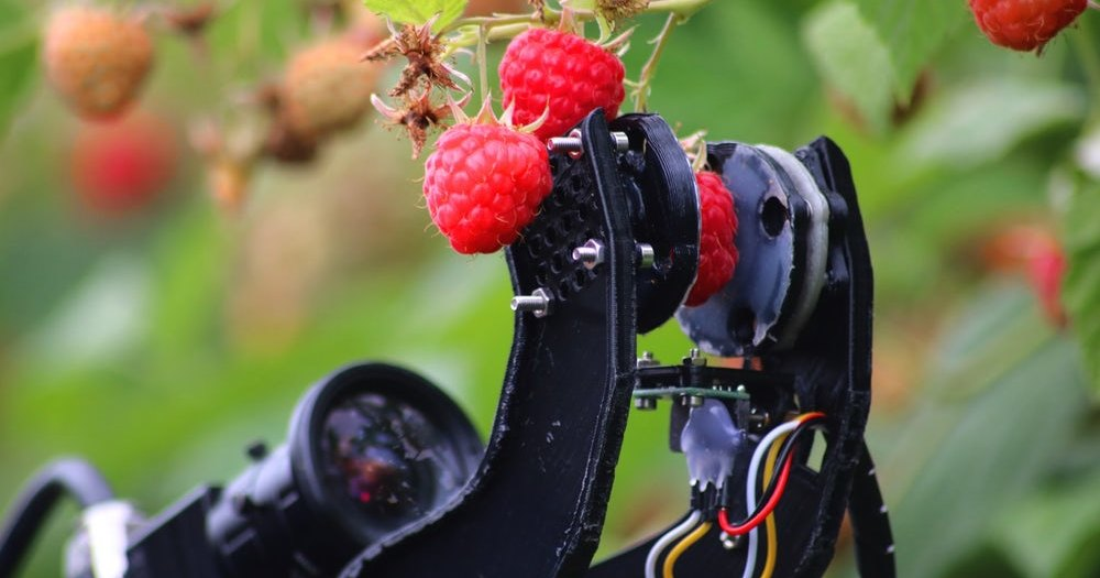 Робот — сборщик малины прошел первые полевые тесты