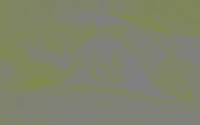 Как устроен формат JPEG - 12