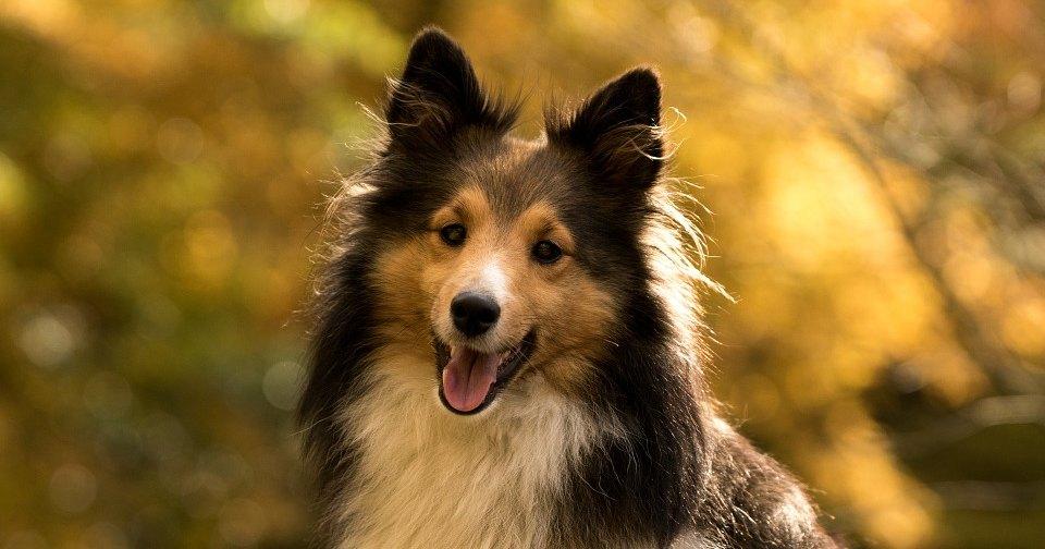 Собаки отразили уровни кортизола у хозяев