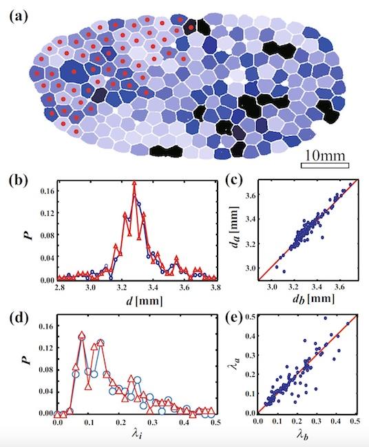 Физика пузырьков: поиск механизма разрушения пены - 11