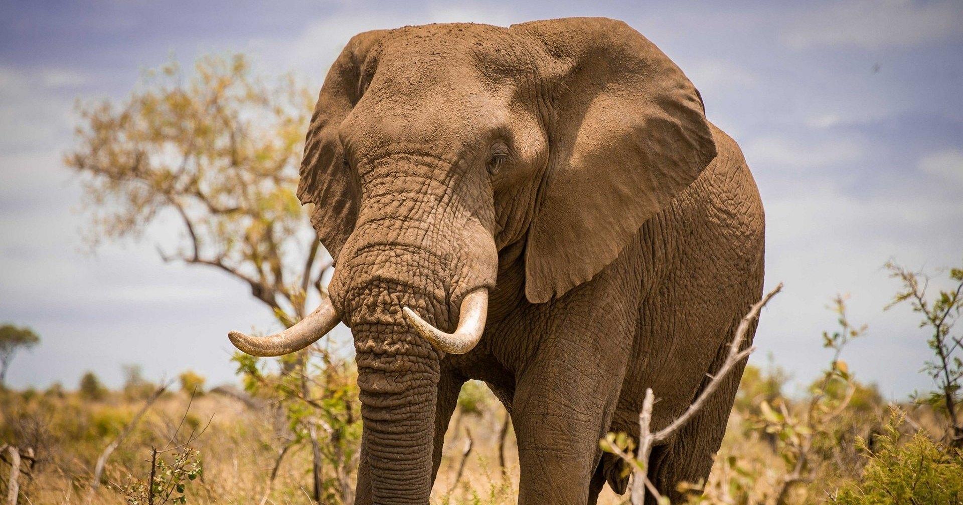Африканский слон затоптал фермера в Ботсване