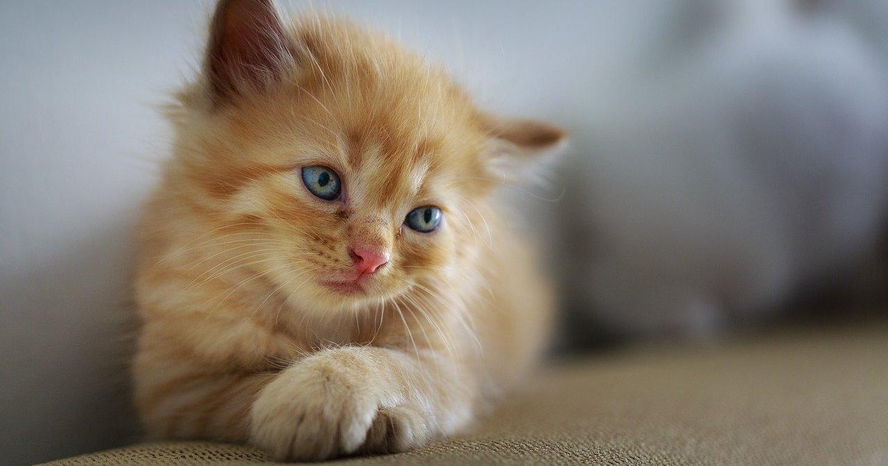 Антитела из птичьих яиц решили проблему аллергии на кошек