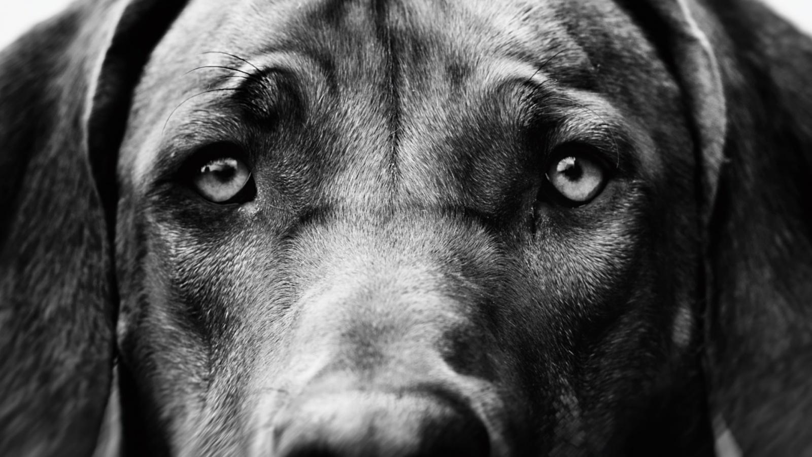 «Щенячьи глазки»: 30 000 лет коэволюции собаки и человека - 1