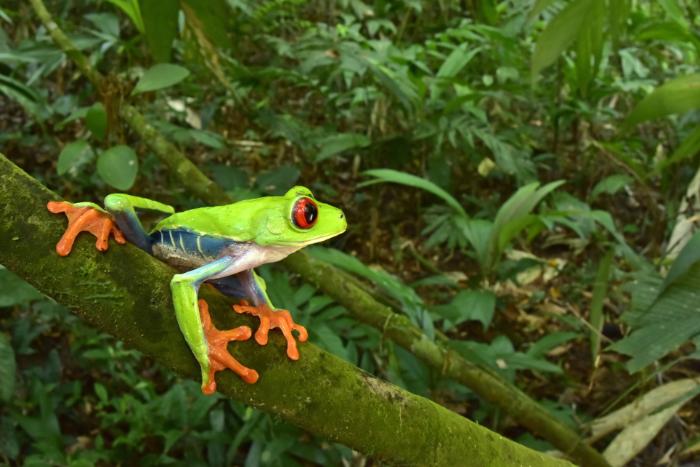 Древние руины в джунглях стали домом для необычных существ