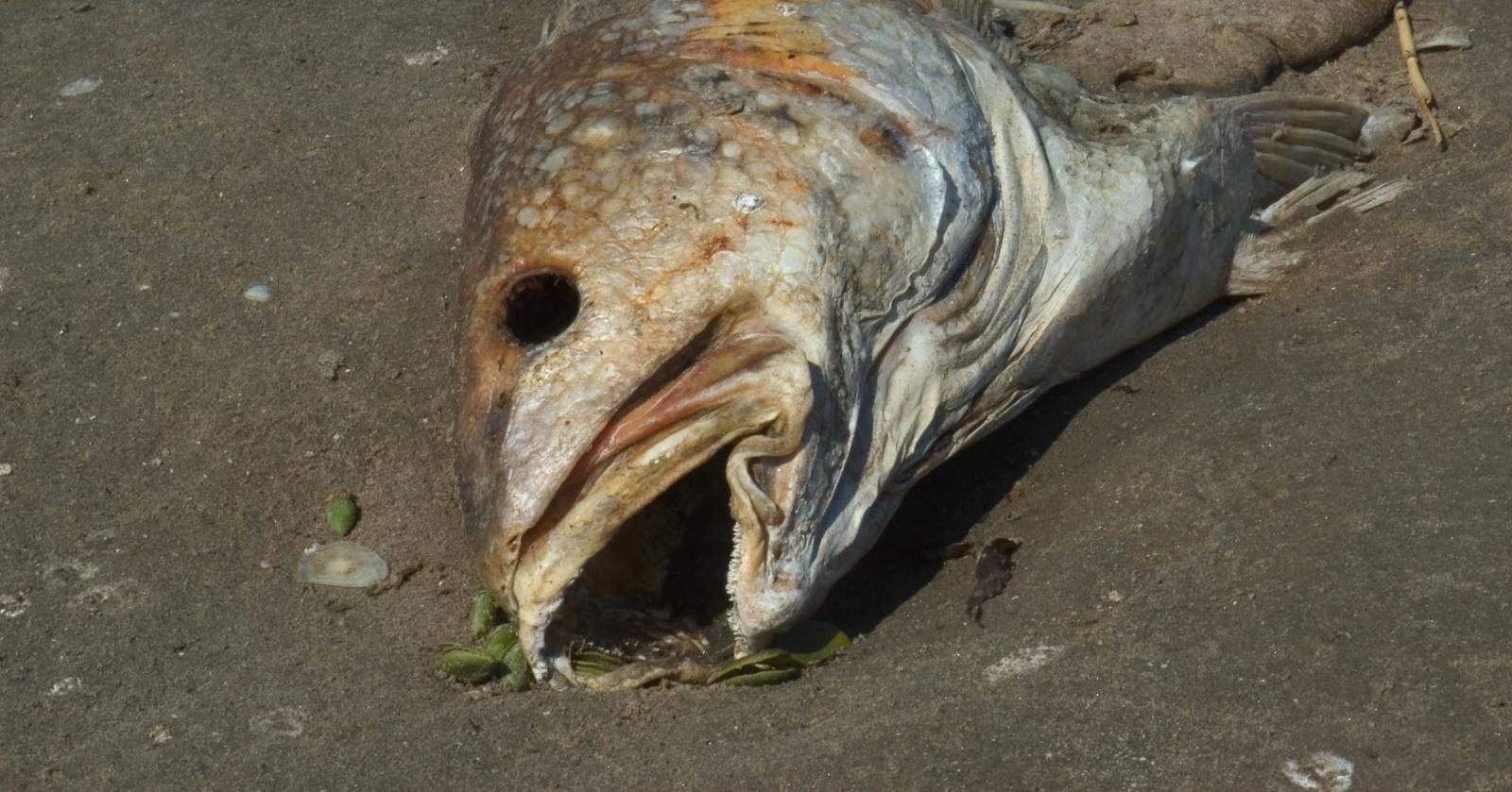 Пестициды в Мировом океане: стоит ли бояться есть рыбу