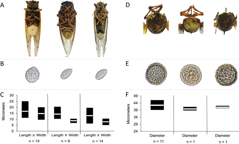 Цикады под грибами превращаются в сексуальных извращенцев
