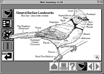 HyperCard, потерянное звено в эволюции Веба - 3