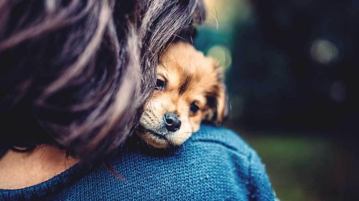 Заразный стресс: межвидовая синхронизация уровня кортизола на примере собак и их хозяев - 1