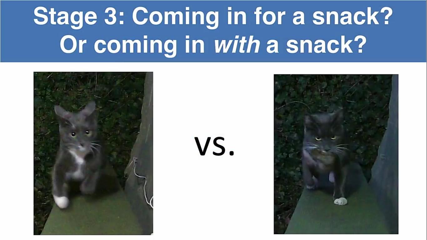 Инженер Amazon создал блокирующее устройство с ИИ, которое не пускает в дом кота с уличной добычей - 16