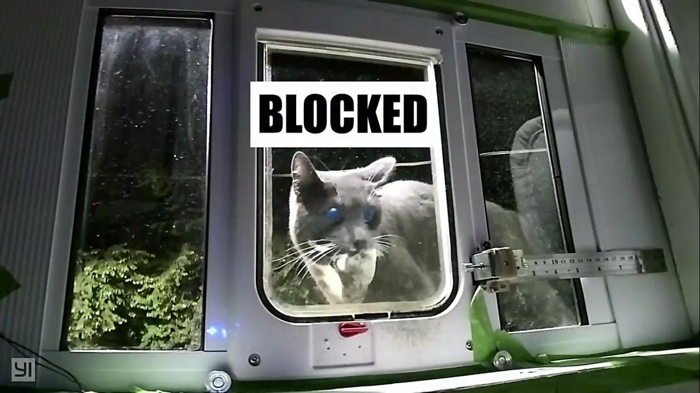 Инженер Amazon создал блокирующее устройство с ИИ, которое не пускает в дом кота с уличной добычей - 19