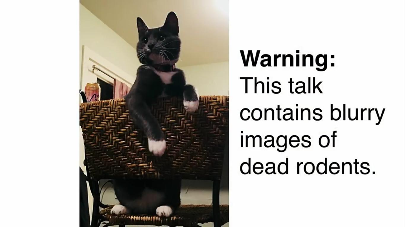 Инженер Amazon создал блокирующее устройство с ИИ, которое не пускает в дом кота с уличной добычей - 3