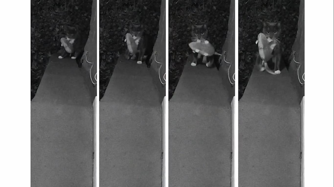 Инженер Amazon создал блокирующее устройство с ИИ, которое не пускает в дом кота с уличной добычей - 4
